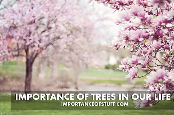 Importance of trees in our life essay