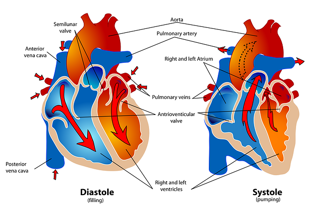 Importance of Coronary Circulation