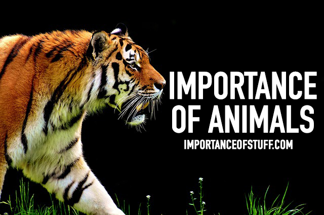 importance of animal