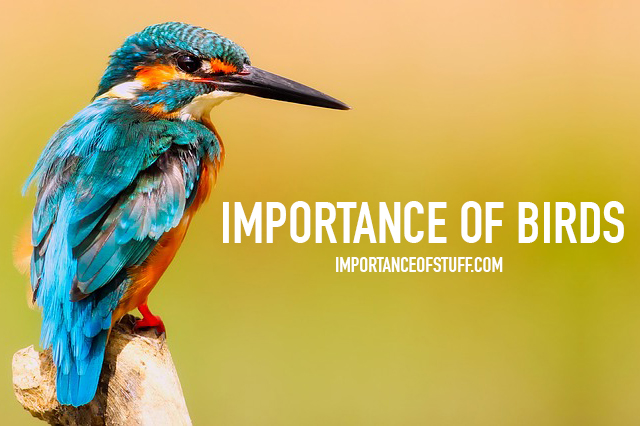 importance of birds