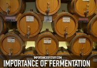 importance of fermentation