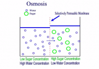 importance of osmosis