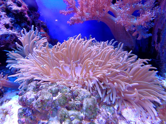importance of coral reef